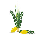 Sukkot - Jewish holiday. Stock Photos