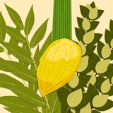 Sukkot. Judaic holiday. Traditional symbols - Etrog, lulav, hadas, arava. Sukkot. Concept of Judaic holiday. Traditional symbols - Etrog, lulav, hadas arava vector illustration
