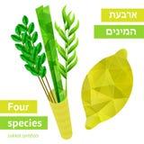 Sukkot symbols. Four species - symbols of Jewish holiday Sukkot. Vector illustration Royalty Free Stock Photography