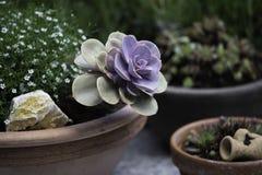 Sukkulenten Tontopf Garten. Fruehling bluehend royalty free stock photography