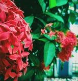 Suko blomma Arkivfoto