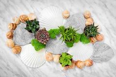 Sukulentów seashells na marmurowym tle i rośliny obraz royalty free