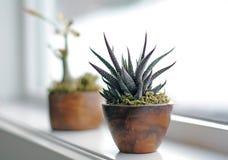 Sukulent rośliny na nadokiennym wypuscie w nowożytnej łazience Obraz Stock