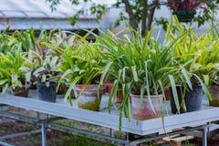 Sukulent rośliny w garnkach Zdjęcia Royalty Free