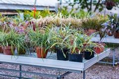Sukulent rośliny w garnkach Zdjęcia Stock