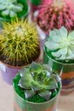 Sukulenty i kaktusy zdjęcie royalty free