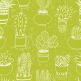 Sukulenty uprawiają ogródek - bezszwowego wzór Fotografia Royalty Free