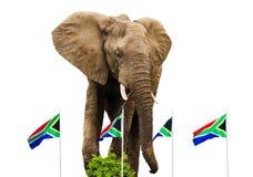 Sul - bandeiras e elefante africanos Imagem de Stock Royalty Free