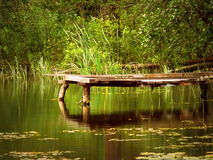 Sul fiume della foresta fotografia stock
