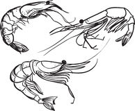 Sul fondo di bianco di а Gamberetto stilizzato Illustrazione di vettore del disegno a tratteggio Fotografia Stock