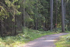 Sul greenway in Svezia Immagini Stock Libere da Diritti