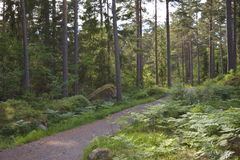 Sul greenway in Svezia Immagine Stock Libera da Diritti