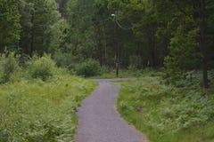 Sul greenway in Svezia Fotografia Stock Libera da Diritti