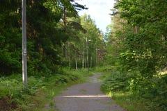 Sul greenway in Svezia Immagini Stock
