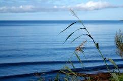 Sul lago Immagine Stock