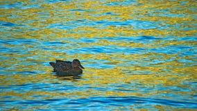 Sul lago dorato Fotografia Stock