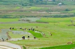 Sul lavoro nei campi di risaia Fotografia Stock Libera da Diritti