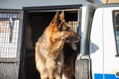 Sul - serviço policial africano K9 Imagens de Stock Royalty Free