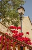Sul territorio del monastero della st Neofitas. Il Cipro Fotografie Stock