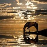 Sul tramonto Immagini Stock