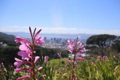 Sul - Wildflowers africanos Imagem de Stock Royalty Free