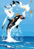 Sula degli uccelli di attacco dell'orca Immagini Stock Libere da Diritti