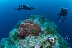 Sulawesi du sud-est, Indonésie 8 mars 2018 : Les plongeurs plongent photographie stock