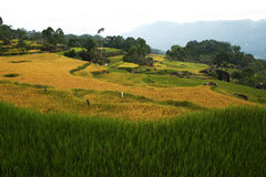 Sulawesi landscape Stock Images