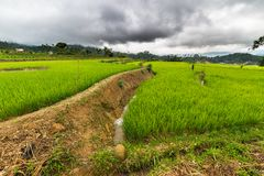 Sulawesi rice fields Royalty Free Stock Images