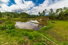 Sulawesi rice fields Stock Image