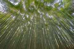 Sulco bonito do bambu de Arashiyama Fotos de Stock Royalty Free