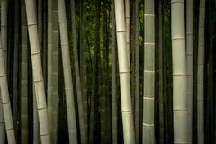 Sulco de bambu fotos de stock