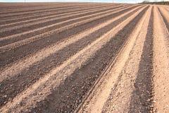 Sulco Ploughed do campo Imagem de Stock