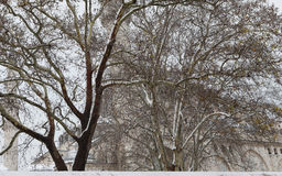 Suleymaniye Mosque with tree and snow, Istanbul. Stock Photography
