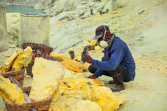 Sulfur miner Stock Photography