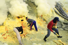 Sulfur Miners. 27/05/2015, Banyuwangi, East Java, Indonesia: Sulfur miners in the ijen crater Banyuwangi, Indonesia. The health condition of miners is very risky Stock Photos