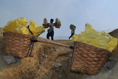 Sulfur miners in Kawah Ijen. Miner carry heavy load of sulfur from Ijen crater Royalty Free Stock Images