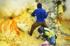 Sulfur Miners at Work, Kawah Ijen Volcano, East Java, Indonesia Royalty Free Stock Photo