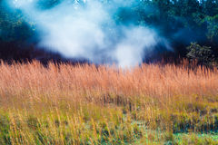 Sulfur vents Stock Images
