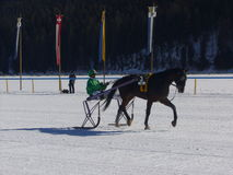 Sulky Trotter. Before a race. St Moritz, Switzerland: Horse Races take place every February on the frozen lake Royalty Free Stock Photo