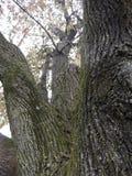 Sull'albero fotografie stock libere da diritti