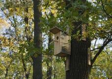 Sull'alimentatore dell'uccello dell'albero immagini stock libere da diritti