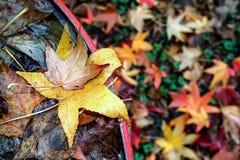 Sull'autunno, foglie immagine stock libera da diritti
