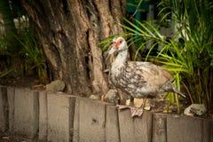 Sull'azienda agricola dell'uccello Fotografie Stock