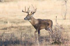 Sulla caccia per un compagno fotografie stock libere da diritti