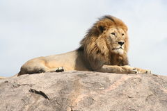 sulla för leoneriposoroccia Royaltyfria Foton
