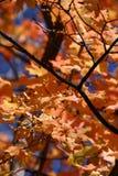 Sulla fine nell'albero - 762 Fotografie Stock