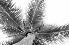 Sulla palma Fotografia Stock