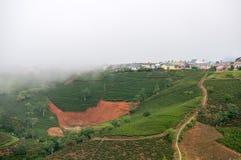 Sulla piccola parete ad alto nell'azienda agricola del tè Fotografia Stock Libera da Diritti