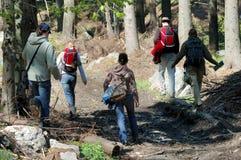 Sulla pista attraverso la foresta Immagini Stock Libere da Diritti